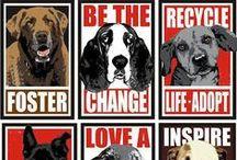Animal Rescue / animal rescue, homeless pets, homeless animal, dog rescue, pet rescue, cat rescue, homeless dog, homeless cat, homeless pet, adopt a dog, adopt a cat, adopt a pet, pet adoption, cat adoption, dog adoption