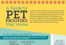 Pet Safety & Health / dog health, pet health, cat health, dog safety, pet safety, cat safety, owning a pet, owning a dog, owning a cat, pet care, cat care, dog care, raising a pet, raising a dog, raising a cat