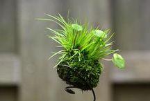 The Indoor Garden / Inspiration to grow indoors!
