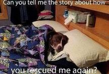 Adoption = Happy / Fostering and adopting pets if the way to go!!!