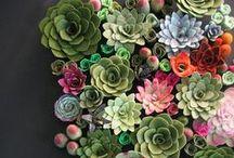 roślinki/ plants / herbs, plants, pots