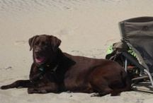 Dog Friendly along the Albemarle Sound