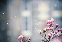 Seasons / Includes all the seasonal memories and beautiful surroundings...