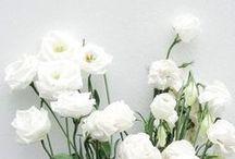 BOTANICA / Florabundance