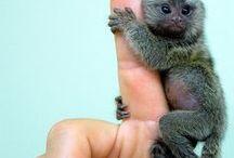 Monkeys / So much like us
