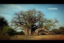 Baobab Films