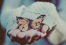 Flutter by butterflies / Butterflies are the heaven sent kisses of angels