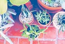 Plantes vertes... / Les photos marquées de mon lien m'appartiennent et ne sont pas libres de droit. Merci donc de bien vouloir mettre mon lien lors de toute utilisation ... http://sunrise.abeachylife.com/