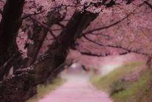 Enchanting / by NRG