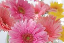 Gerbera   Floral Design Inspiration / Be inspired to use this stunning colorful flower in all your designs!