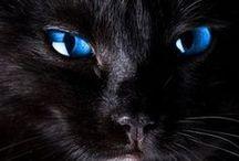Mundo de felinos / Amo los felinos, y aqui se vera reflejado dicho amor