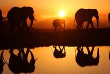 Africa Travel / Travel guides, tips and inspiration for visiting Africa   #Africa #Safari