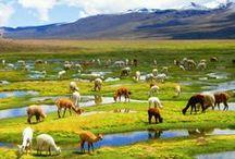Peru Travel / Travel guides, tips and inspiration for visiting Peru   #Peru #Lima
