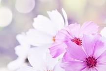 Flowers /plants