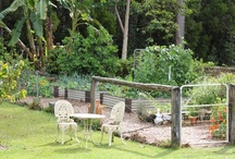 Creating your Garden... / Here's a way of creating your dream garden before actually planting anything in the ground...This is a fun way to create your perfect space ! Collect plenty of images to inspire you to create your own exceptional garden.