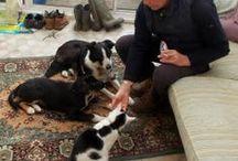 Pets of interest