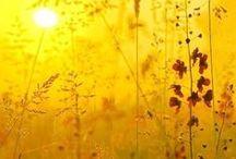 Yellow Nature!