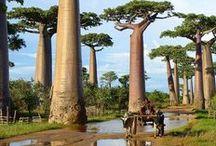 Destinos ÁFRICA / O melhor do continente africano através de  suas paisagens, vilas, monumentos, habitantes e cidades