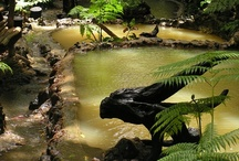 Caribbean Health & Wellness / Dominica is a unique island, full of natural spas & hot pools, pristine rivers, hiking trails, fresh local fruits &vegetables, ital food, and friendly people - all of which will help melt your stress away!