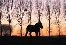 Landleven: paarden