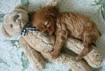 hondjes /puppie