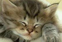 poesjes/kittens