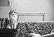 Feline Fantastic