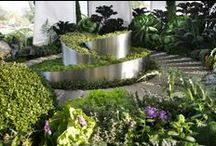 Permaculture Will Save The World / PERMACULTURE = the design and production of edible landscapes mirroring natural ecosystems.