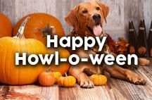 Happy Howl-O-Ween! / Fun ways to celebrate Halloween with our dogs! Do you have ideas to share? Pin it!