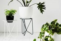 plants + stands / These modern steel frame plant stands and planter boxes are for those who have a love for greenery in their home. Featuring the divine plant stands from the talented duo at Ivy Muse designed and manufactured in Melbourne with solid steel frames.
