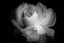 Flowers#Nature