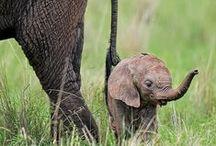 Wildlife in all its Glory / Stunning wildlife