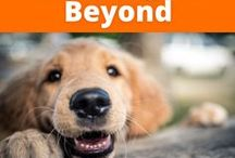 Cute Dogs and Beyond