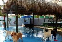DOG boarding ideas / dog boarding set ups