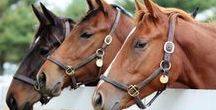 Successful Horse Business / Information on succeeding in the horse business