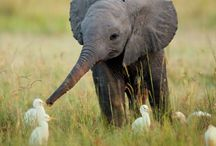 Elephant Love / by Chrissie Marie