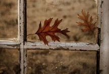 Autumn / by Lily Cronin