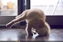 Celeste's Yoga Inspiration