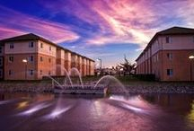 Beaujolais Village / Sonoma State University has been ranked one of the top 25 best college dorms in the nation. Beaujolais Village is comprised of suite-style dorms that accommodate four people. Each Beaujolais dorm has four bedrooms with their own bathrooms, a shared living room and a kitchen. / by Sonoma State University