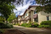 Sauvignon Village / Sonoma State University has been ranked one of the top 25 best college dorms in the nation. Sauvignon Village is comprised of suite-style dorms that accommodate six people. Each Sauvignon dorm has two single bedrooms and two double bedrooms. Suites include four bathrooms, a shared living room, kitchen and either a sliding glass door if students live on the first floor or a balcony if students live on the second floor. / by Sonoma State University