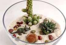 Totally Terrariums / Inspiration for your tiny indoor garden.