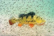 Freshwater Photos