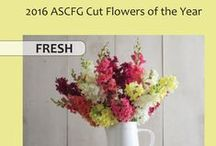 ASCFG Cut Flowers of the Year / Members of the Association of Specialty Cut Flower Growers, Inc. have selected the Fresh, Woody Stem, and Bulb Cut Flowers of the Year for 2016. The evaluation is based on the cultivars' performance in the ASCFG National Cut Flower Trials, and recommendations from cut flower growers across the country.  http://www.ascfg.org/index.php?option=com_content&task=view&id=513&Itemid=1025