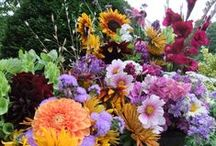 About Us / The Association of Specialty Cut Flower Growers (ASCFG) was formed in 1988 to unite and educate field and greenhouse cut flower growers.