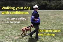Dog Training Video Tips / Tips on dog training and behavior modification.