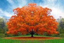 Fall / by Joann Hall