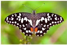 Butterflies / by Shailendra Tokas