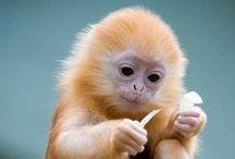 Baby Animals / by Shailendra Tokas