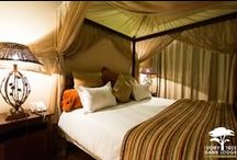Executive Suites / Ivory Tree boasts 4 luxury suites. Each features the following: Air conditioners which provide heating and cooling. En-suite bathroom and outside shower. Covered patio. Tea and coffee making facilities. Mini bar fridge. Private Plunge Pool Lounge
