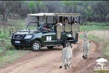 Wildlife  / Ivory Tree Game Lodge is based in the Pilanesberg Big 5 Game Reserve. Have a look at the beautiful creatures our rangers & guests managed to capture while out on safari
